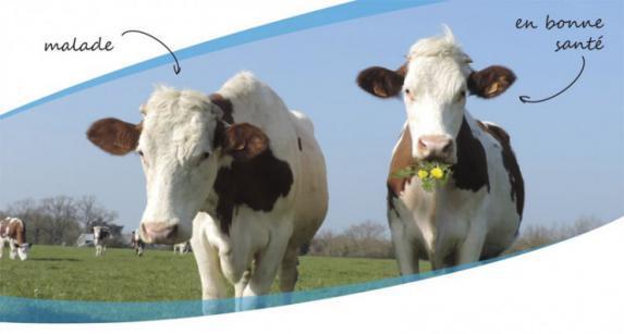 Rendez-vous de l'élevage lait