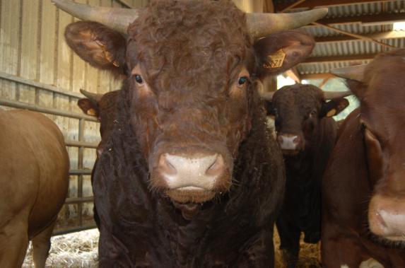 Assemblée générale des producteurs de Ter'élevage