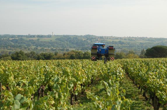 Restructuration du Vignoble