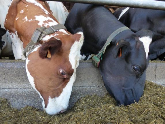 Rendez-vous de l'élevage lait à Saint-Gildas-des-Bois