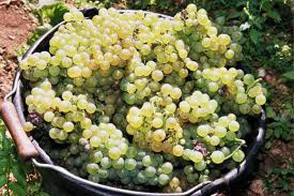 Transmission et installation en viticulture
