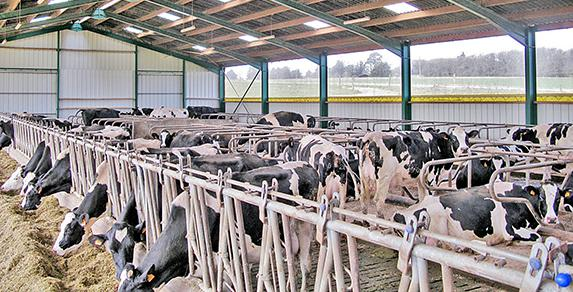 Formation « Signes de vaches : ce que vous dit votre vache »