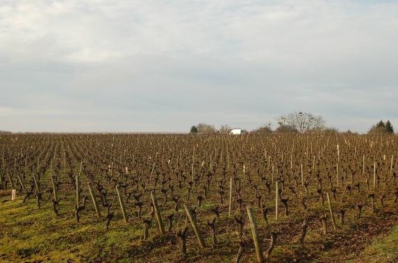 Concours de taille de vignes de l'Asavpa