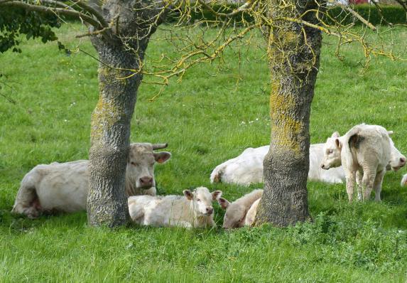 Journée régionale viande bovine