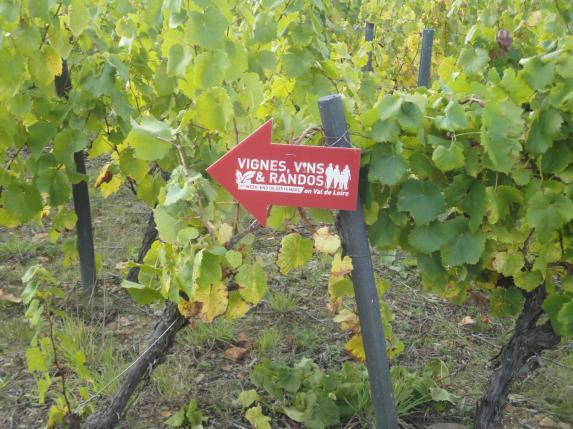 Vignes, vins, randos