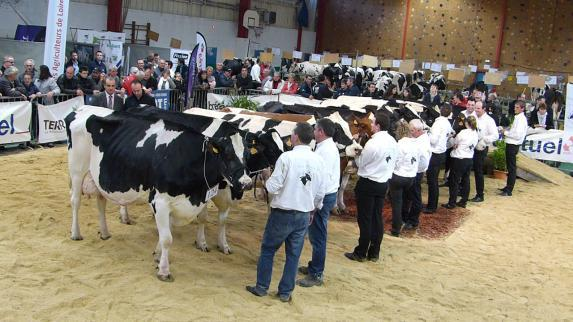 Concours départemental Prim'Holstein