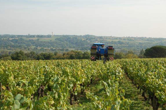 Restructuration du Vignoble