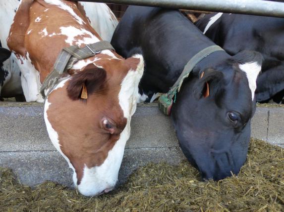 Rendez-vous de l'élevage lait à Rouans