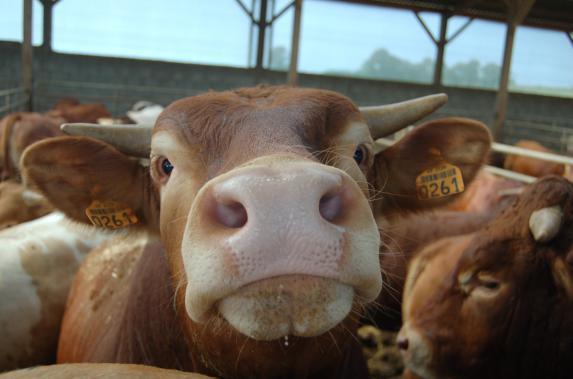 Rendez-vous de l'élevage viande à Terranjou