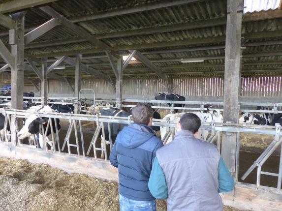 Groupe éleveurs laitiers
