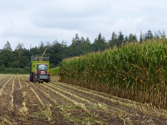 Analyses de matières sèches du maïs avec Seenovia
