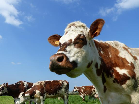 « Les Seenoviales » lait à Ancenis