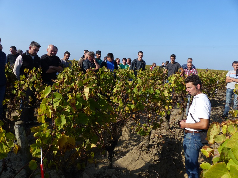 Journée technique travail du sol en viticulture