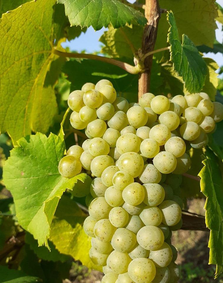 Assemblée générale des vins AOC de Nantes